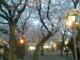 Hanami20070331_3