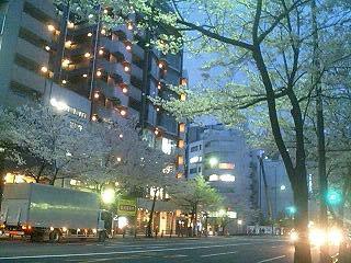 Hanami20070331_4